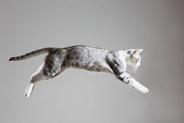 Tabby cat jumping picture id502893559?b=1&k=6&m=502893559&s=612x612&w=0&h=dn7p2boe803etxvpatpsx sau0zsyja85ylr3guws9s=