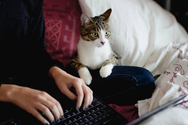 Tabby cat looking at a laptop near a teenage girl picture id1069310370?b=1&k=6&m=1069310370&s=612x612&w=0&h=uxfc k7u4qd3kpedqtgtxwjqrfx2ijb2628ycesejdq=