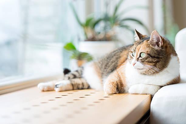 полосатая кошка кошка лежать у окна. - котик яркий стоковые фото и изображения