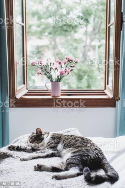 Tabby cat lying down on a bed picture id854219198?b=1&k=6&m=854219198&s=612x612&h=r3w6famktgm0f9qhmgaimuxsanarttbdoxhbkwft5cy=