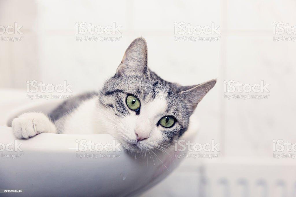 tabby cat lying in sink stock photo