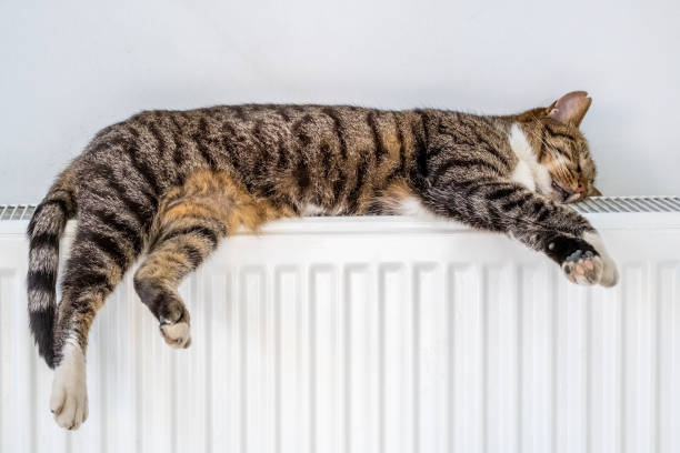 Tabby cat lying on a warm radiator by the wall stock photo