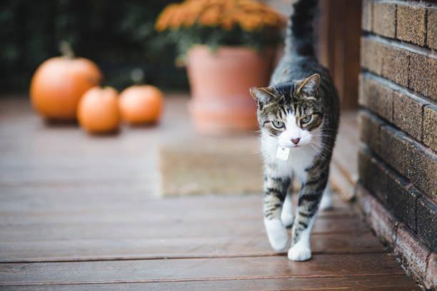tabby katze auf einer veranda - vorbau dekor stock-fotos und bilder