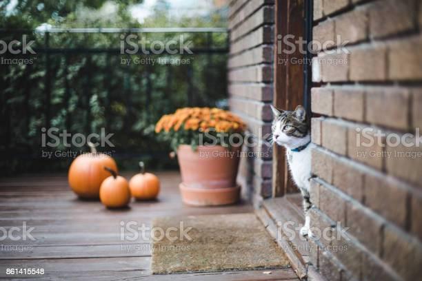 Tabby cat on a porch picture id861415548?b=1&k=6&m=861415548&s=612x612&h=wwc c8voqcyc7t2vnusodpukfxovu biik zinotlvu=