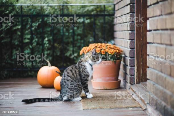 Tabby cat on a porch picture id861415566?b=1&k=6&m=861415566&s=612x612&h=gbf0kqrrtpkrdqsikclixflh zzhig5nyovxmpa5tai=
