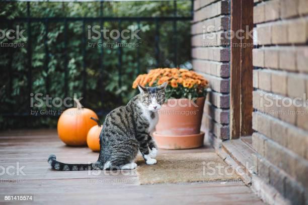 Tabby cat on a porch picture id861415574?b=1&k=6&m=861415574&s=612x612&h=2fdm40k85aqh0wjkb56nbsldrr6dnkuykvdmoqnhywa=