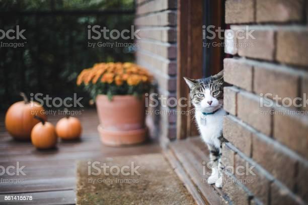 Tabby cat on a porch picture id861415578?b=1&k=6&m=861415578&s=612x612&h=0khmmfli9i 3tn wmtuqtq4f2fqryxxhglt1e2gu6g8=
