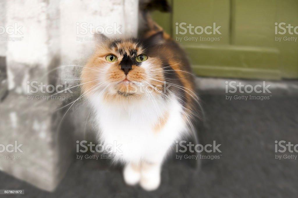 Tabby cat on doorstep in front of green door stock photo