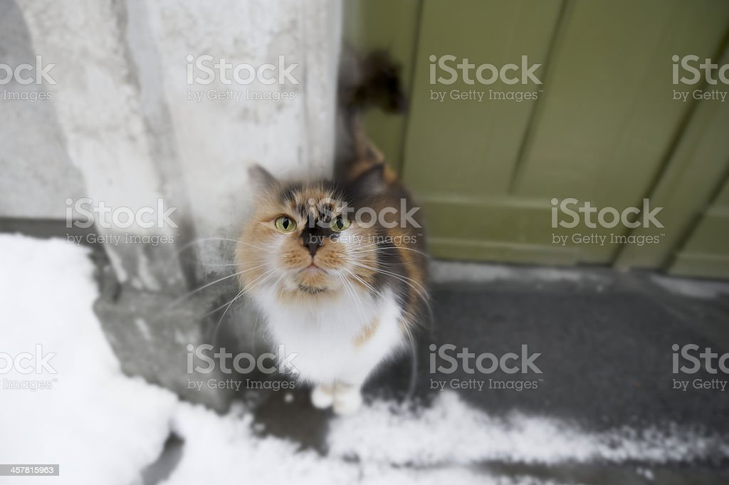 Tabby cat on doorstep in the winter after snowfall stock photo