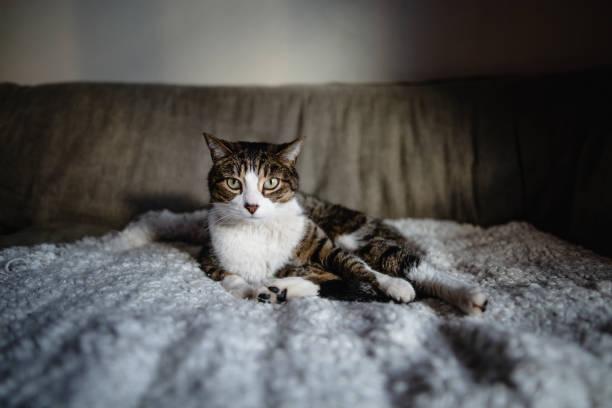 Tabby cat picture id1019134070?b=1&k=6&m=1019134070&s=612x612&w=0&h=8wjh7bmqpw4rzqjblwdys5xjgwuittfxzogdn7xpu e=