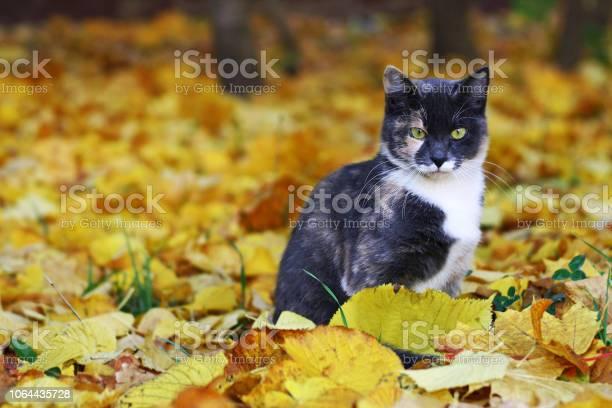 Tabby cat picture id1064435728?b=1&k=6&m=1064435728&s=612x612&h=zk9xkq7kxes bvpwvnl vv5whfuqrc2h lmle5zr3sq=