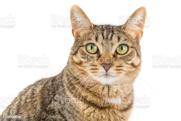 Tabby cat picture id1126000539?b=1&k=6&m=1126000539&s=612x612&h=zewrkcm4mjqbmc10c7kuz8rbashipnbn 60raizhdui=