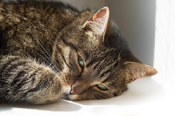 Getigerte Katze cat – Foto