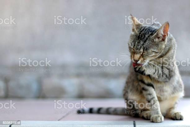 Tabby cat picture id833831818?b=1&k=6&m=833831818&s=612x612&h=rnneo7ybgevtopxtwxowcjitsyq1kqbbrjuhdziihc4=