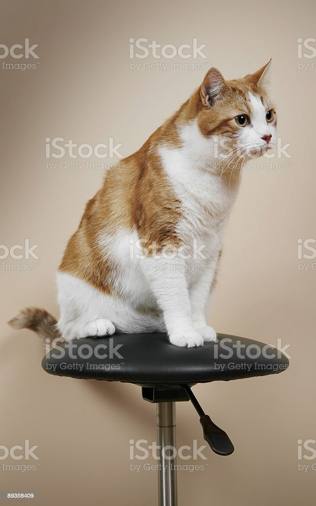 Pręgowany kot zbiór zdjęć royalty-free