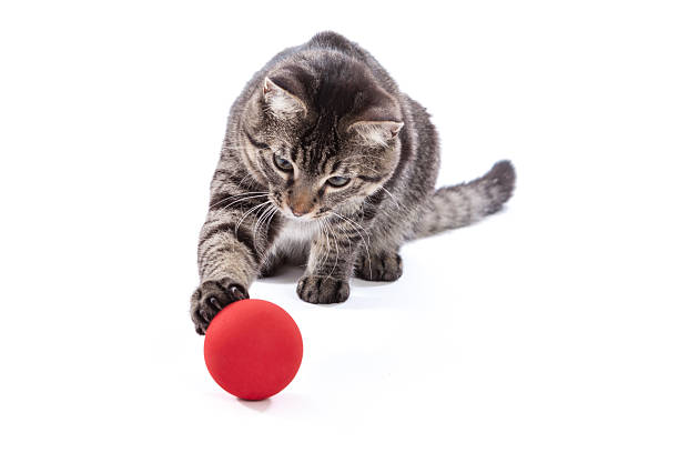 Tabby Cat Playing with Ball stock photo