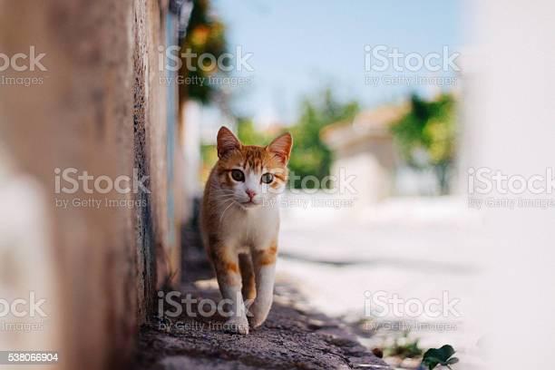 Tabby cat portrait picture id538066904?b=1&k=6&m=538066904&s=612x612&h=dszpp6yxc7txnwy qrsner79gd6lhms ltcofqs7mkm=