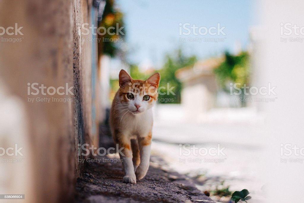 Tabby cat portrait stock photo