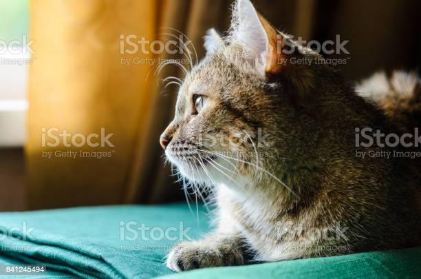 Tabby cat portrait picture id841245494?b=1&k=6&m=841245494&s=612x612&h=xvb3lpiovtgxl8xftk9jxwkaronerrpdurd3mhy9aho=