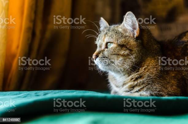 Tabby cat portrait picture id841245592?b=1&k=6&m=841245592&s=612x612&h= j 3tt6ay8gotbnpqff2iqe3chdyizhw1uwedpxu08o=