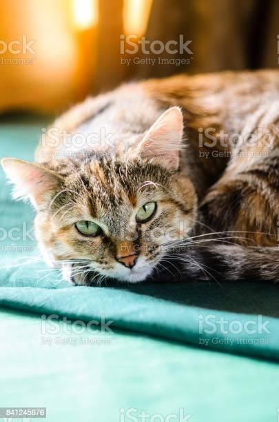 Tabby cat portrait picture id841245676?b=1&k=6&m=841245676&s=612x612&h=x9yzs2qz7jaib5ffxsyeqmivbsmh9d5rfmc3nsmelse=
