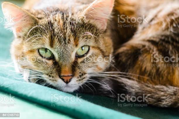 Tabby cat portrait picture id841245710?b=1&k=6&m=841245710&s=612x612&h=keoqsmrz2vrcjzbez5gf0o5cp55gsjx2zefzyer rhw=