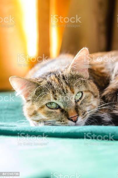 Tabby cat portrait picture id841245736?b=1&k=6&m=841245736&s=612x612&h=bjclbvxg4xduqng5kaghke3xfgvvfjwdqkkft rhrk4=