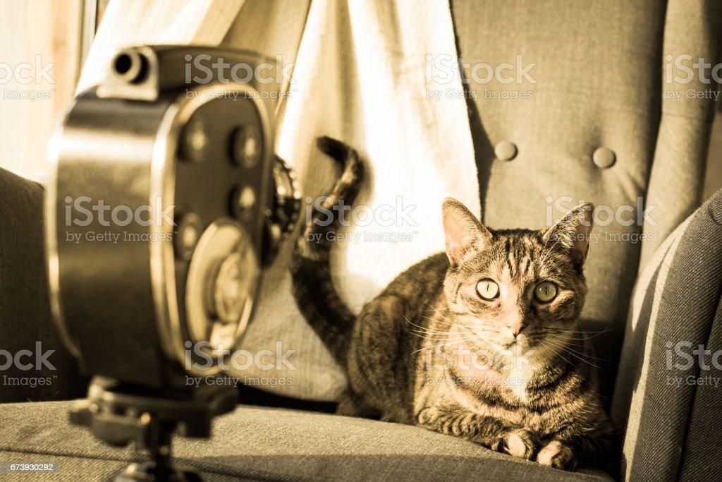 Tabby cat posing to vintage film camera. stock photo