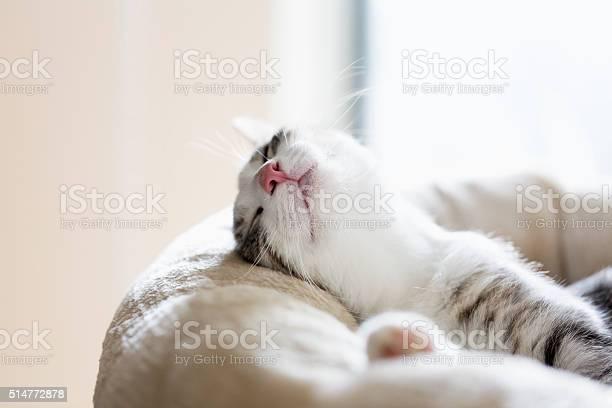 Tabby cat relaxation picture id514772878?b=1&k=6&m=514772878&s=612x612&h=loargk9dsyv7bmoufdtjsr yxrvloaifcl0zjjgf6ky=