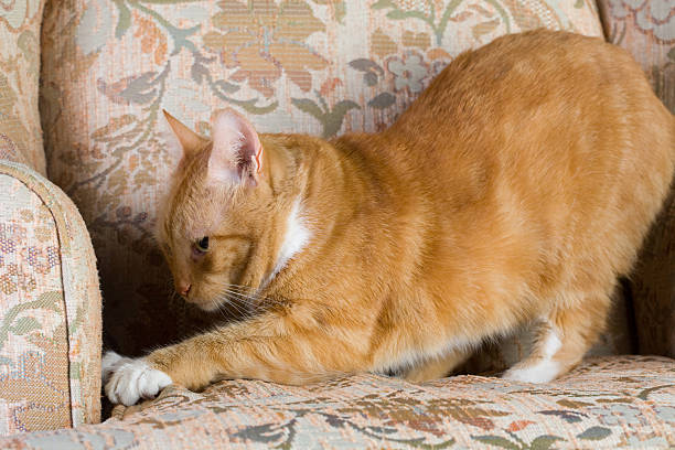 tabby cat scratching a chair - scratching stock photos and pictures
