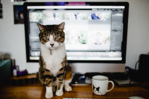 Tabby cat sitting in front of a computer picture id959378166?b=1&k=6&m=959378166&s=612x612&w=0&h=7cs7uos gaajpoje gn8xwq3dsmluftqv3xacbg7n9i=