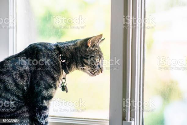 Tabby cat sitting in windowsill looking out window picture id670022654?b=1&k=6&m=670022654&s=612x612&h=s nsnwfyepkxnxqvj 0myp9h3pzshn79ydschqadklu=