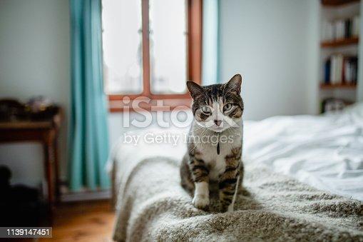 animal, domestic cat, bedroom, bed,