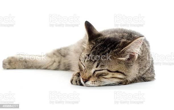 Tabby cat sleeping against a white background picture id459884277?b=1&k=6&m=459884277&s=612x612&h=skotke2g2utfj7hugefy93kuxrixpse6ex3zrkyc0yc=