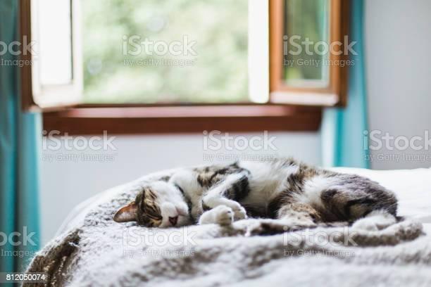 Tabby cat sleeping on a bed picture id812050074?b=1&k=6&m=812050074&s=612x612&h=t8r8mrfxtvxavws  44x598wzfeunpic x 2ip0tsiq=