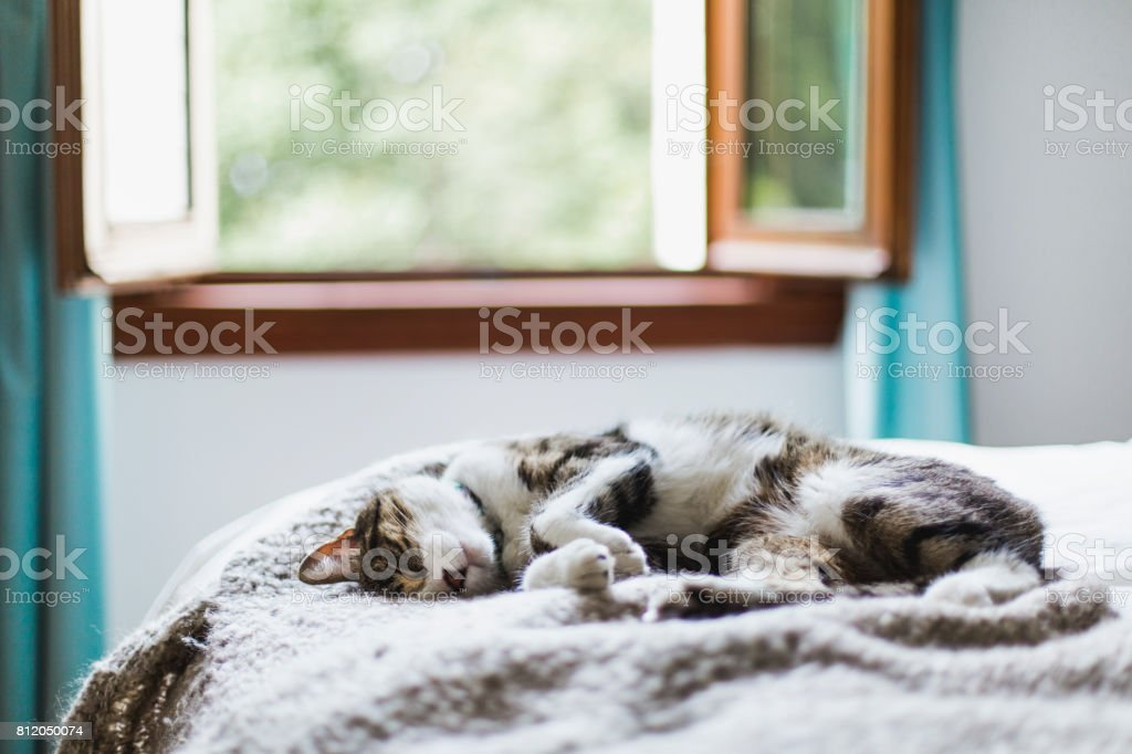 Tabby cat sleeping on a bed stock photo