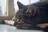 tabby cat sleeping on a windowsill, close up