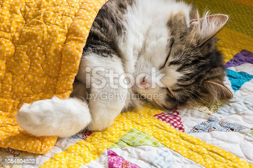 closeup of tabby cat sleeping under yellow quilt cover