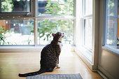 domestic cat, animal themes, pets, animal