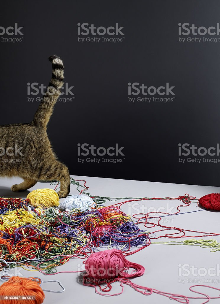 Tabby cat walking away from pile of messy colourful wool 免版稅 stock photo