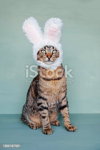 istock Tabby cat wearing funny bunny ears against pastel green background. Copy space. European Shorthair young cat dressed as rabbit, close up. Happy Easter. 1300167051