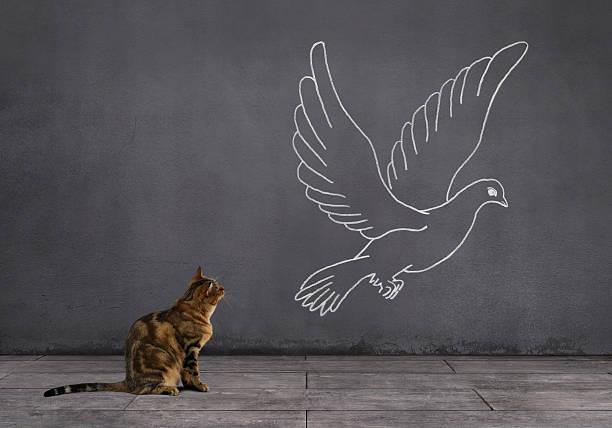 getigerte katze katze mit pigeon zeichnung an der wand - katze zeichnen stock-fotos und bilder