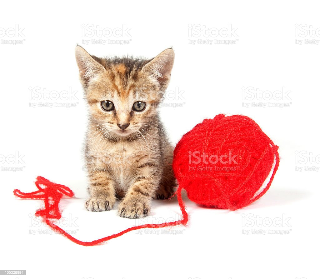 tabby kitten and red ball of yarn royalty-free stock photo