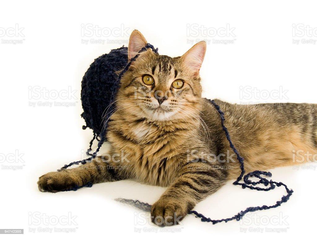Tabby Kitten and Yarn royalty-free stock photo