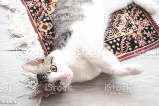 Tabby kitten on persian carpet picture id835888456?b=1&k=6&m=835888456&s=612x612&h=c1f5evtvwojyht4jyrfxko4fnx17vvqavxccqzzov3g=