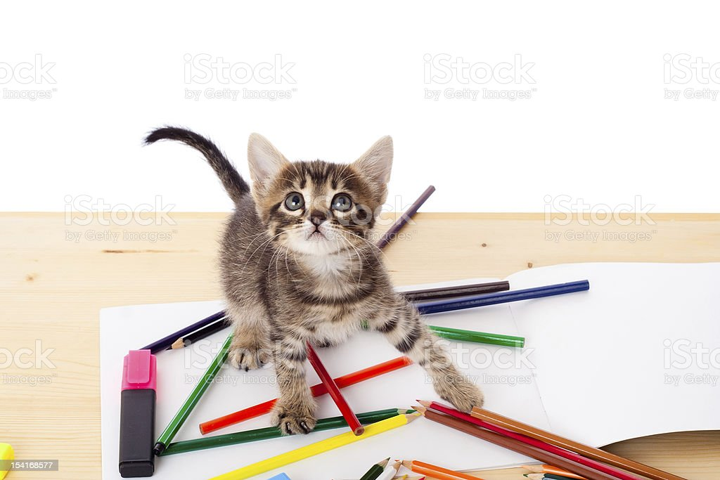 Tabby kitten on table with pencils royalty-free stock photo
