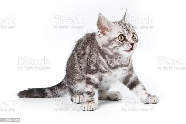 Tabby kitten picture id146001683?b=1&k=6&m=146001683&s=612x612&h=deuwpixqtqaugrbwfl80z83p3qd0xhxvbgrxh9ccspm=