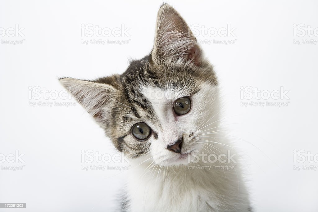 Tabby Kitten royalty-free stock photo