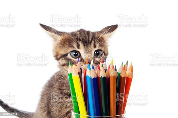 Tabby kitten sniffing color pencils picture id154203291?b=1&k=6&m=154203291&s=612x612&h=3gcblxxw ml6fi1x1cbtcwceklj8tl8qxufjrgzqriw=