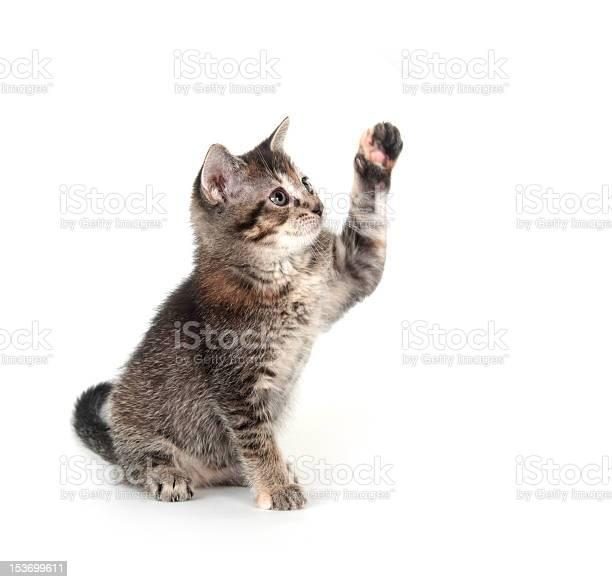 Tabby kitten swinging its paw picture id153699611?b=1&k=6&m=153699611&s=612x612&h=lpapb jcdanuc36pkpnf6vu 5oojifmv65hevib2kzk=